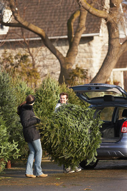 man and woman loading live tree into car